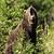 Beargirl70