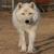 arcticwolf1974