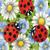 ladybug48