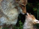 Beijo maternal