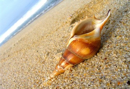 Sea shell - colorful, shore, exotic, waves, sea, beach, rounded, nature, tropics, tropical, sea shell, sands