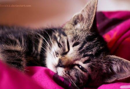 Soft Kitty Cats Animals Background Wallpapers On Desktop Nexus
