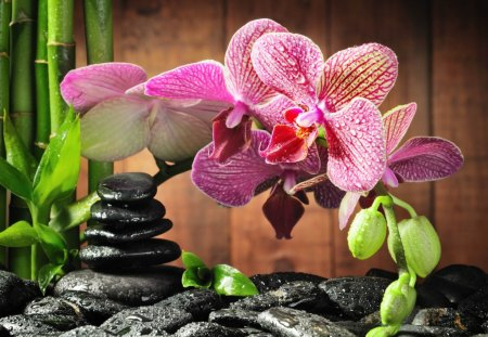 Pink orchid - lovely, pink, orchid, flowers, nice, pretty, still life, stones, leaves, beautiful