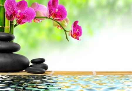 Zen stones and bamboo - flowers, spa, water, summer, bamboo, zen, beautiful, reflection, stones, orchids, green