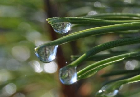 Waterdrops - water, green, grass, flowers, nature, drops, forests