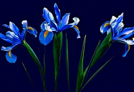 Friendship Series #1--for Rita - flowers, series, blue, iris