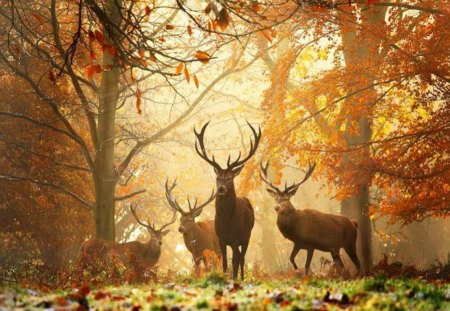 Princes of the Forest - forest, dawn, deer, herd
