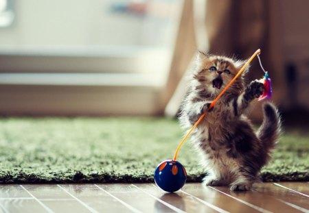 Cat play