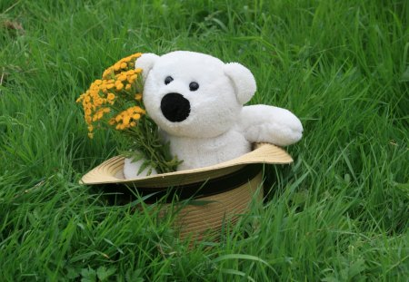 Teddy - grass, bear, teddy, flower
