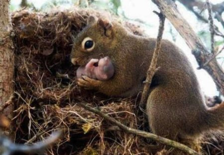 Mama Squirrel & Her Baby - cute, squirrel, newborn, mom, baby, sweet