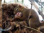 Mama Squirrel & Her Baby