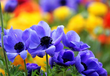 Pretty flowers flowers nature background wallpapers on desktop pretty flowers colorful flowers blue flowers pretty colorful summer time mightylinksfo