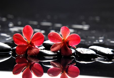 Red flowers on stones - flowers, wet, spa, water, nice, red, reflection, lovely, stones, still life, pretty, black