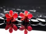Red flowers on stones