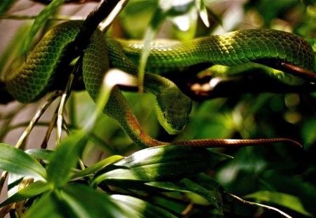 snake - green, snake, leaves