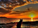 Cat in the sunrise