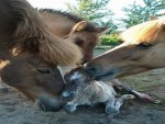 Newborn Foal Welcomed by Family