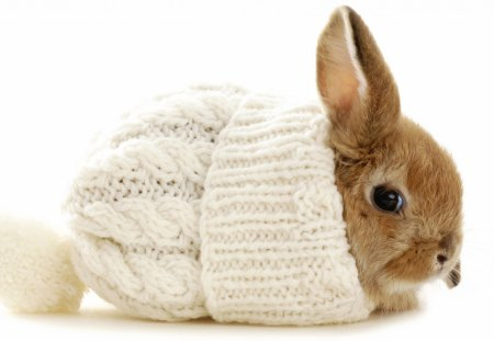 Cute Bunny Rodents Animals Background Wallpapers On