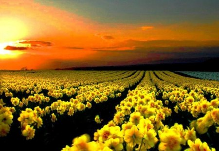 yellow flower garden flowers nature background wallpapers on desktop nexus image 1095780 yellow flower garden flowers nature