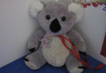 Koala The Star - white, blue, koala, star, black, red, grey