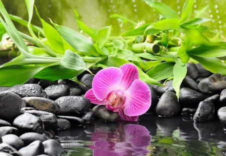 Pink flower reflection - pink, water, flower, grass, stones, leaves, green, beautiful, summer, reflection, lake, pond