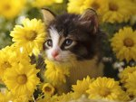 cute kitty under flowers