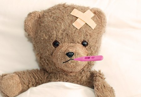 Teddy is Sick - potography, sick, teddy, well