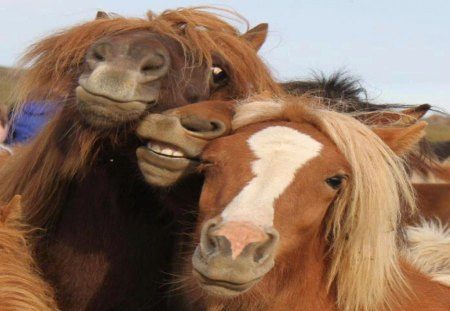 Horsin' Around - cute, silly, funny, horse, play