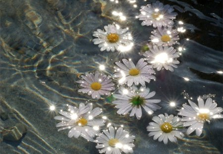 Sparkle - amazing, sparkle, daisies, water, bright, flowers, brilliant, sunshine, daisy