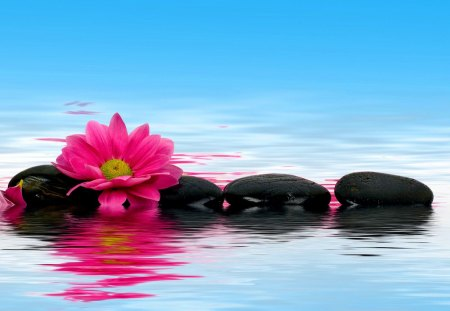 Pink flower reflection - lovely, pink, colorful, blue, nice, mirrored, flower, pretty, stones, spa, beautiful, reflection