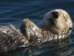 Shhh Don't Wake the Otter....