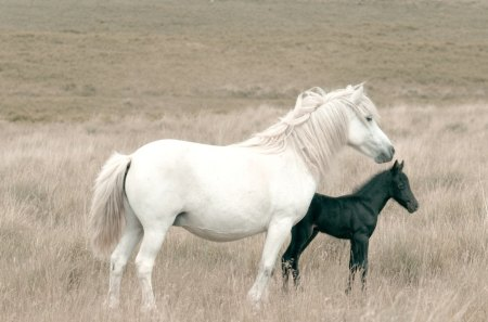 Big And Little White And Black Horses Animals