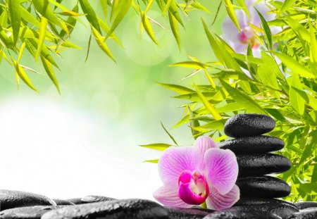 Spa still life - grass, treatment, relax, orchid, spa, water, bamboo, flower, branches, stones, still life, green