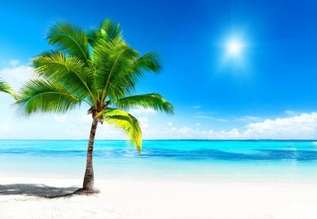 Lone palm tree on a hot day - shore, sun, dazzling, palm, sea, beach, sand, bright, hot, white sands, tropics, blue, horizon, ocean, shadow, lonely, sky, water, rays, lone, day, nature, blue sky, tropical, palm tree