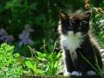 Baby Sylvester ....