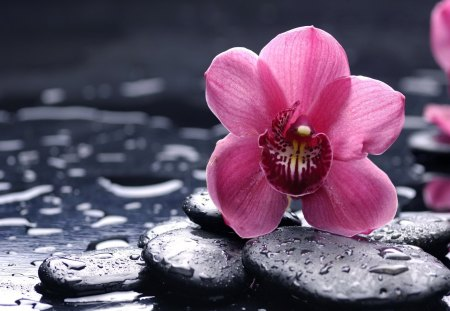 Spa still life - lovely, pink, water, flowers, nice, pretty, still life, wet, stones, spa, beautiful