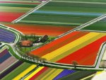 Rainbow Fields in The Netherlands