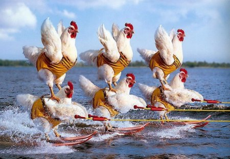 Chick synkron waterskiing - fun, waterskiing, water, chick, funny