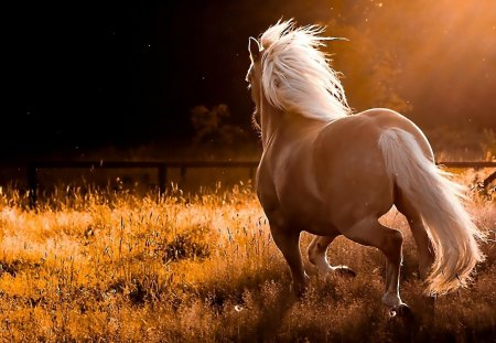 Running Horse - galopping, grass, wild, nature, horse, landscape