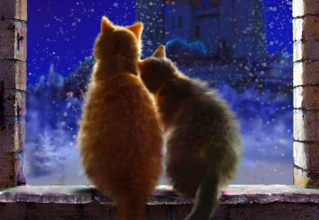 Cats love in winternight - cats, peaceful, romantic, windows, amazing, winter, animals, night, c, love, color, blue, blue dreams, colors, loved, lovely, beautiful, romance