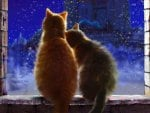 Cats love in winternight