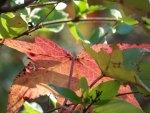 An Alabama Autumn