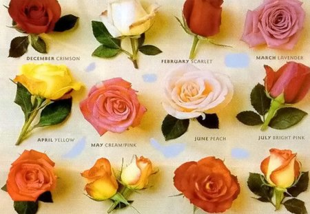 For each month - months, colors, roses, twelve, year