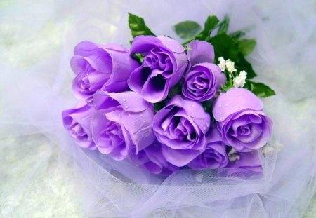 Purple beauties for Purple-Haze - flowers, bouquet, purple, blue, roses, green