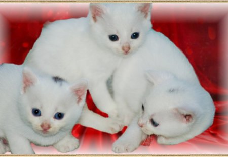 nos chatons - chatons, le refuge, nos, avant