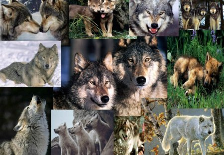 Wolf Wallpaper Collage - abstract, collge, wallpaper, wolf wallpaper collage