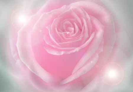 PINK ANGEL - rose, pink, angel, light