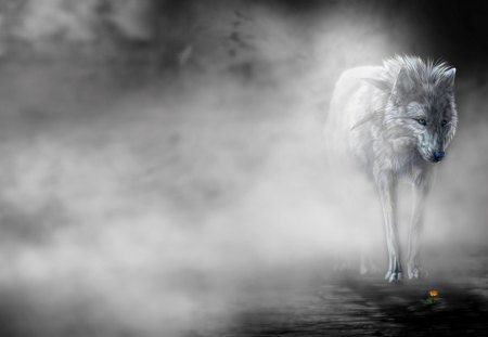 LONELY WOLF in the MIST - lonely, mist, wolf, flower