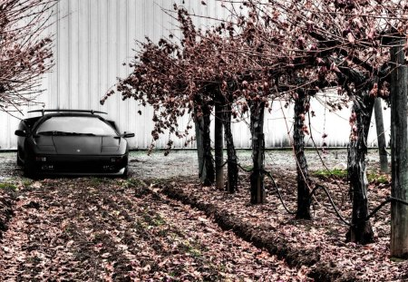 lambroghini diablo by cherry trees - car, trees, leaves, building