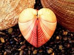Heart Shaped Seashell